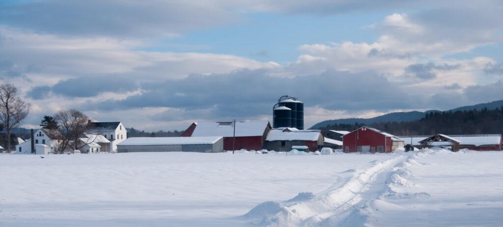 Miller in Snow